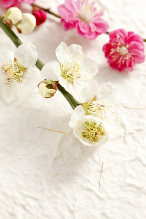 april flowers: Plum Blossom