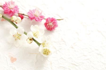 Plum Blossom Stock Photo - 18621583