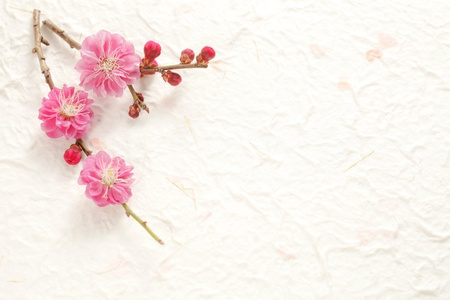 Plum Blossom Stock Photo - 18621668