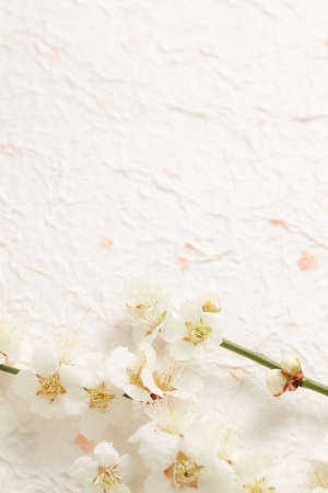 Plum Blossom Stock Photo - 18621584