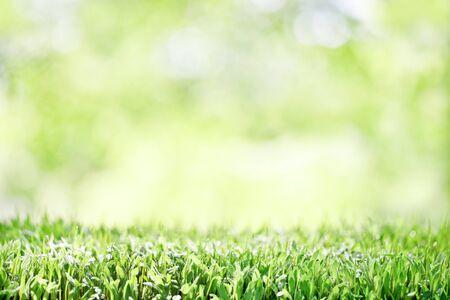 background, germination, fresh green,