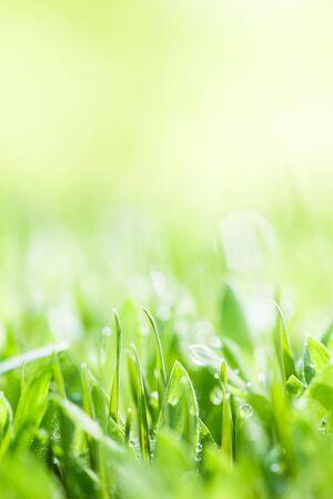 Background, Fresh Green, Germination