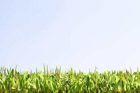 Background fresh green, germination Stockfoto