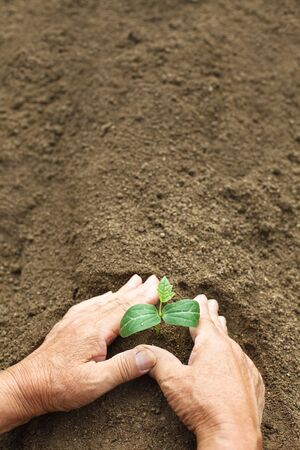 Agriculture, Germination