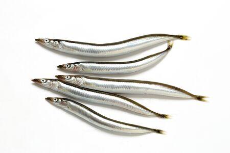 Sand eel Archivio Fotografico