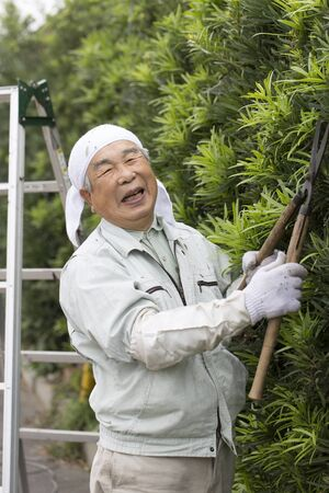 Japanese senior man pruning a tree