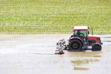 Paisaje de siembra de arroz japonés
