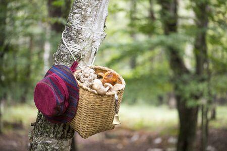 Japan mushroom hunting