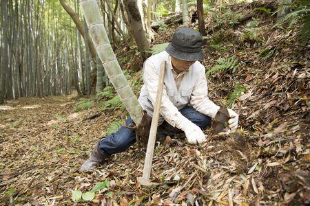 Bamboo farmer