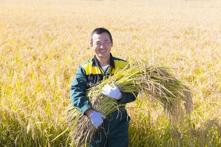 Japanese young farmer harvesting rice