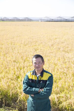 Young Farmer in Japan, Paddy Rice in Rich Harvest