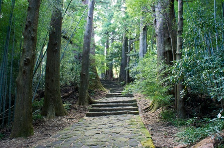 tableland: Stone paved road in forest, kumano Japan
