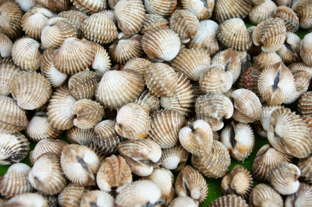 Cockles at the market Stock Photo - 13827561