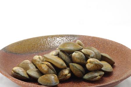 clam: Clam short-necked