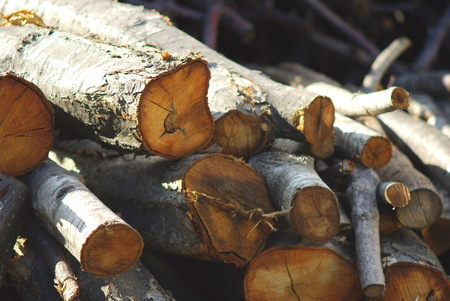 outdoor pursuit: Firewood of the fireplace
