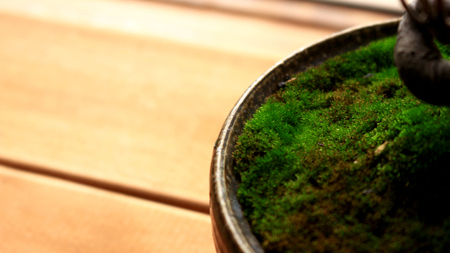 Close-up of moss that grew in a bonsai pot