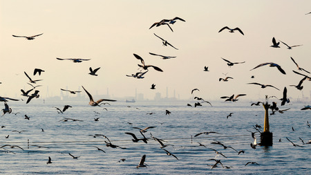 Flock of seagulls flying above the sea Standard-Bild