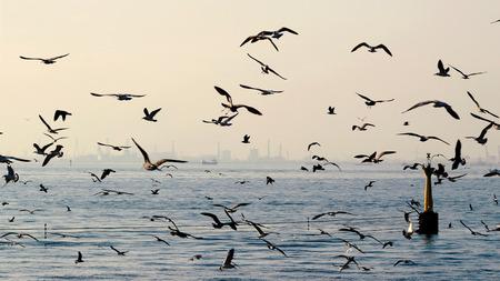 Möwenschwarm fliegt über dem Meer Standard-Bild