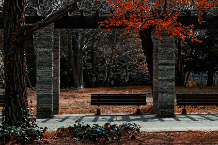 autumn park lined with wooden benches