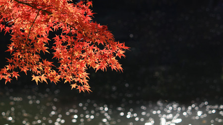 View of reddish Japanese maple leaves and sparkling water 免版税图像