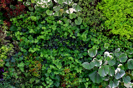 Photograph of wall surface greening structure colored with various plants for background material