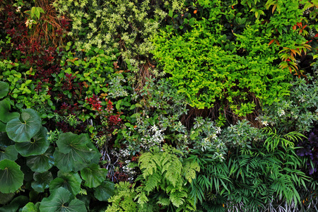 Photograph of wall surface greening structure colored with various plants for background material Stock fotó