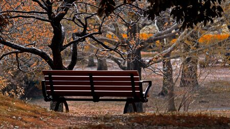 Autumn quiet park bench Stockfoto