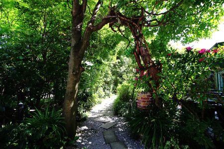 Green garden entrance in summer