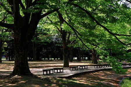 Summer park landscape with abundant greenery of trees