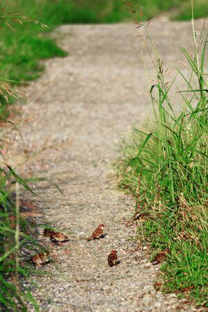 Path of plexus where sparrows gather Stockfoto
