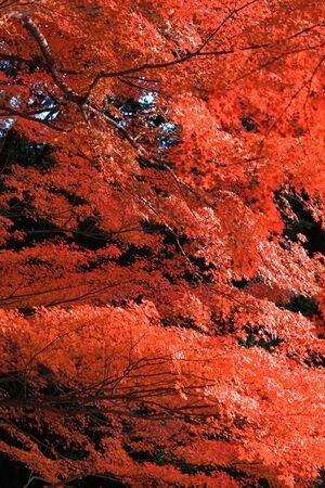 Landscape of autumnal leaves forest Stockfoto
