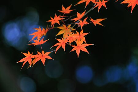 View of reddish Japanese maple leaves and sparkling water Stockfoto