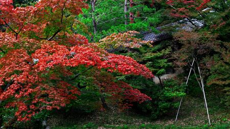 Autumn landscape of Japanese garden