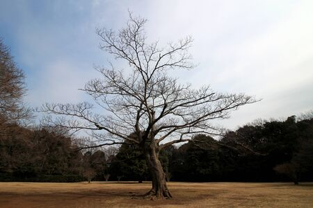 A single leafless tree standing in an autumn park square