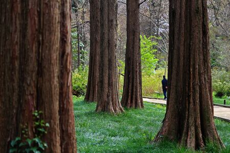 Men strolling on a forest park promenade Stockfoto