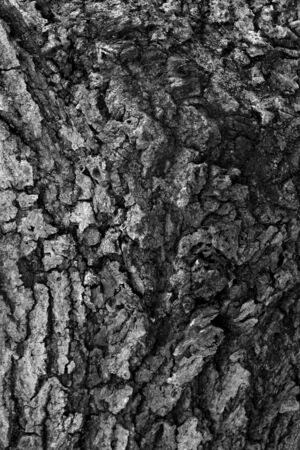 Monochrome abstract photo of a close up bark on a tree trunk Stockfoto
