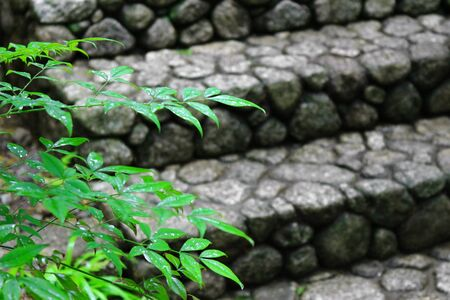 Landscape after the rain with stone steps and green leaves to feel the Japanese atmosphere Stockfoto - 131870064
