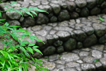 Landscape after the rain with stone steps and green leaves to feel the Japanese atmosphere