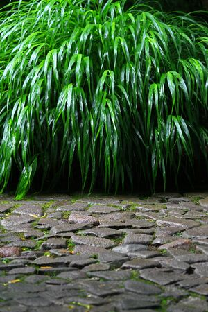 Rainy landscape of a Japanese garden with stone pavement and Gramineous lush grasses Stockfoto - 131914152