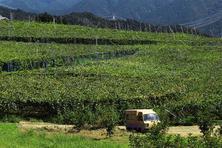 Vineyard landscape at