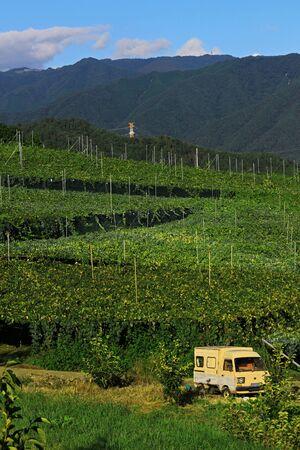 Vineyard landscape at Kyoho Hill in Yamanashi, Japan Stockfoto