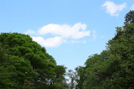 Photo of background of lush trees and blue sky