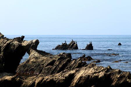 Sea birds gathered at the coastal rocks