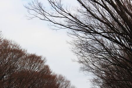 A view of trees without leaves