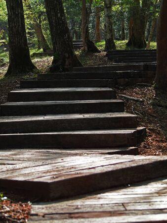 Boardwalk in the quiet autumn forest