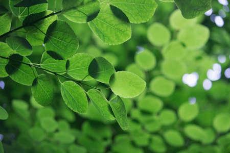 Closeup photo of fresh green leaves