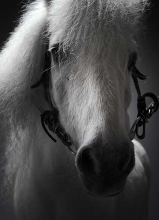 portrait of a white horse photo