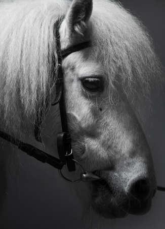 portrait of a white horse photo