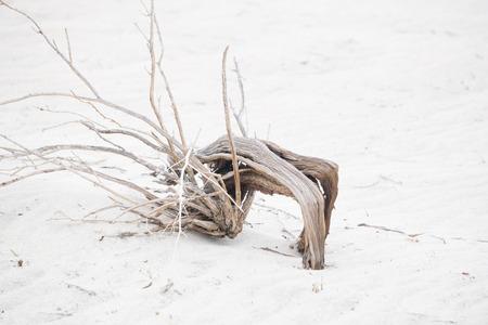 Desert Branch