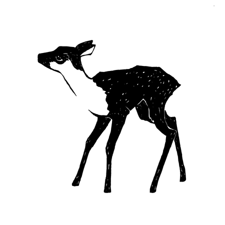 white tail deer: hand drawn fawn vector illustration, young deer isolated on white background, wildlife clip art Illustration